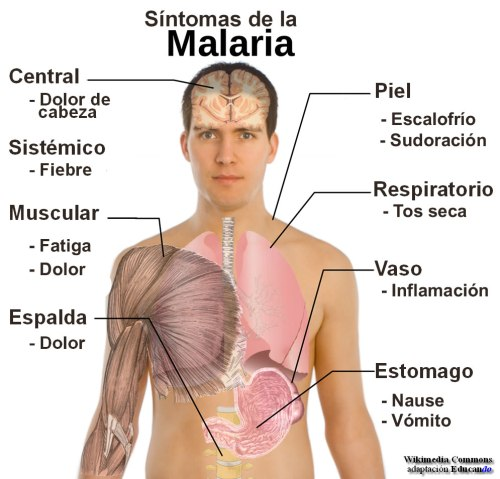malaria2