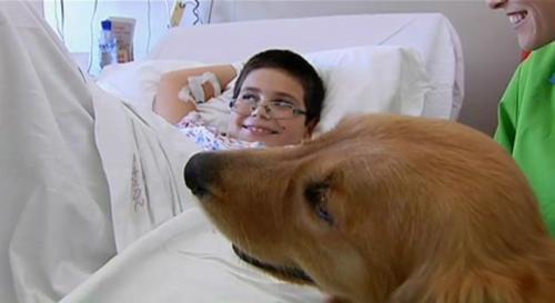 Para que los animales puedan estar en el hospital es necesario que estén acreditados como perros de asistencia y que no exista riesgo alguno de que puedan transmitir ninguna enfermedad.