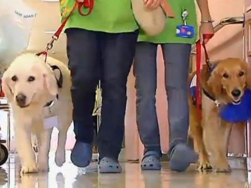 Los perros entraron primero al jardín de psiquiatría, luego al interior de este servicio, el hall del hospital hasta que finalmente pudieron visitar también las habitaciones y prácticamente todos los servicios.